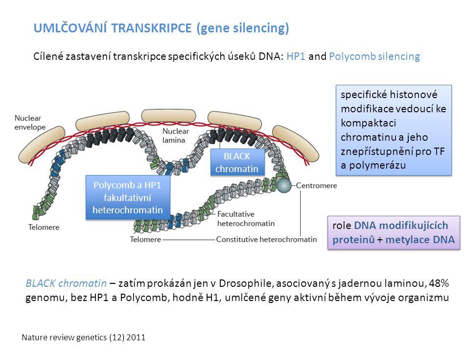 UMLČOVÁNÍ TRANSKRIPCE (gene silencing) Nature review genetics (12) 2011 BLACK chromatin – zatím prokázán jen v Drosophile, asociovaný s jadernou lamin