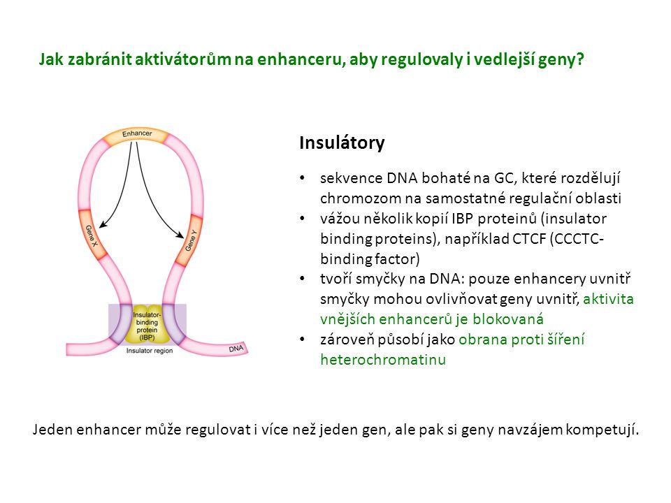Insulátory lze inaktivovat metylací jejich GC vazebných míst Imprinting H19/Igf2 lokusu metylace cytosinů v DMR1, DMR2 a ICR u otce brání vazbě CTCF na insulátor Enhancer se váže na promotor Igf2 genu u matky se díky CTCF vytvoří regulační smyčka znemožňující enahnceru aktivovat Igf2 gen, místo toho zapne H19 gen Paternálně zděděný lokus Maternálně zděděný lokus