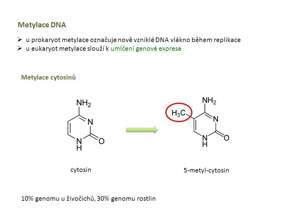 Metylace DNA  u prokaryot metylace označuje nově vzniklé DNA vlákno během replikace  u eukaryot metylace slouží k umlčení genové exprese Metylace cy
