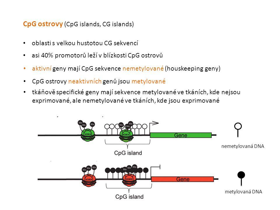 CpG ostrovy (CpG islands, CG islands) oblasti s velkou hustotou CG sekvencí asi 40% promotorů leží v blízkosti CpG ostrovů CpG ostrovy neaktivních gen