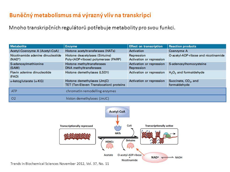 Buněčný metabolismus má výrazný vliv na transkripci Mnoho transkripčních regulátorů potřebuje metabolity pro svou funkci. Trends in Biochemical Scienc