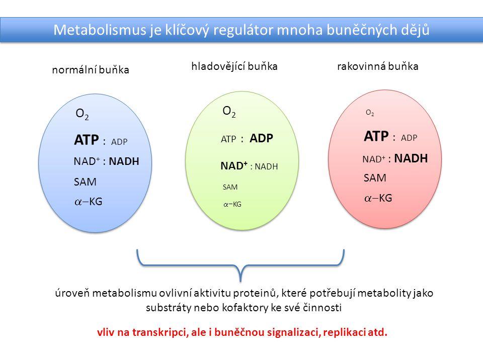 normální buňka hladovějící buňkarakovinná buňka ATP : ADP NAD + : NADH O2O2 SAM  KG ATP : ADP NAD + : NADH O2O2 SAM  KG ATP : ADP O2O2 SAM  KG N
