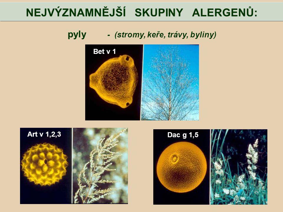 pyly - (stromy, keře, trávy, byliny) NEJVÝZNAMNĚJŠÍ SKUPINY ALERGENŮ: Bet v 1 Art v 1,2,3 Dac g 1,5