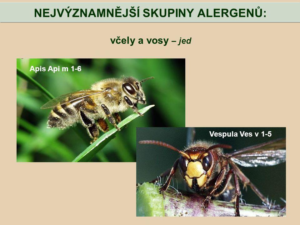 včely a vosy – jed NEJVÝZNAMNĚJŠÍ SKUPINY ALERGENŮ: Apis Api m 1-6 Vespula Ves v 1-5