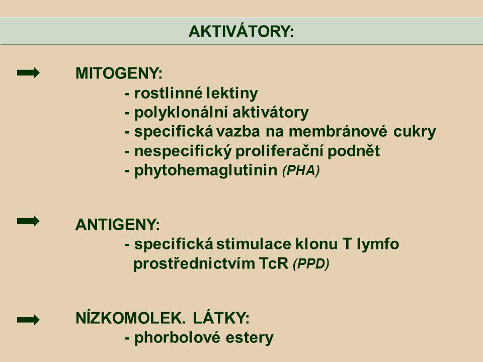 MITOGENY: - rostlinné lektiny - polyklonální aktivátory - specifická vazba na membránové cukry - nespecifický proliferační podnět - phytohemaglutinin