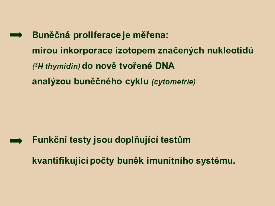 Buněčná proliferace je měřena: mírou inkorporace izotopem značených nukleotidů ( 3 H thymidin) do nově tvořené DNA analýzou buněčného cyklu (cytometri