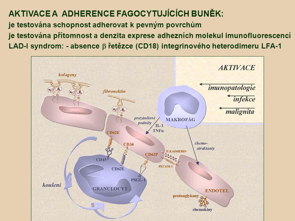 AKTIVACE A ADHERENCE FAGOCYTUJÍCÍCH BUNĚK: je testována schopnost adherovat k pevným povrchům je testována přítomnost a denzita exprese adhezních mole