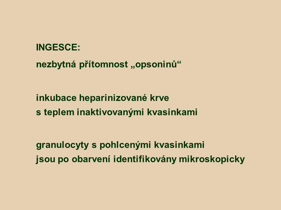 """INGESCE: nezbytná přítomnost """"opsoninů"""" inkubace heparinizované krve s teplem inaktivovanými kvasinkami granulocyty s pohlcenými kvasinkami jsou po ob"""