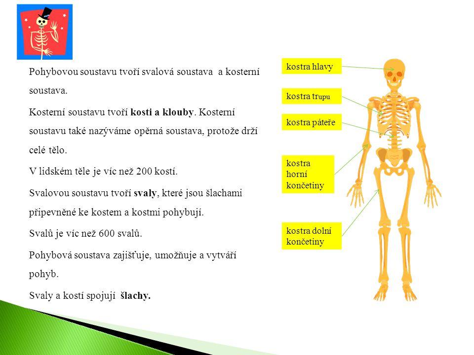 Pohybovou soustavu tvoří svalová soustava a kosterní soustava. Kosterní soustavu tvoří kosti a klouby. Kosterní soustavu také nazýváme opěrná soustava