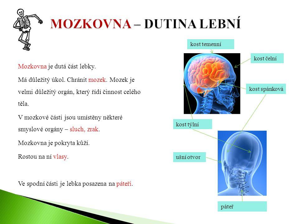 Mozkovna je dutá část lebky. Má důležitý úkol. Chránit mozek. Mozek je velmi důležitý orgán, který řídí činnost celého těla. V mozkové části jsou umís