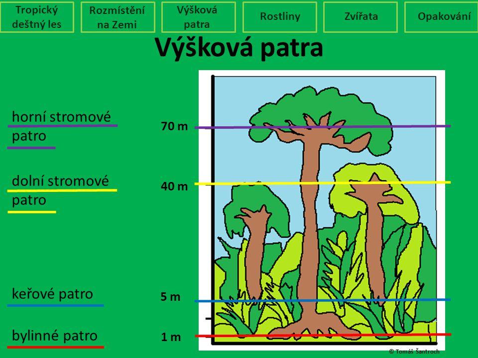 Výšková patra Tropický deštný les Rozmístění na Zemi Výšková patra RostlinyZvířataOpakování 1 m 5 m 40 m 70 m bylinné patro keřové patro dolní stromov