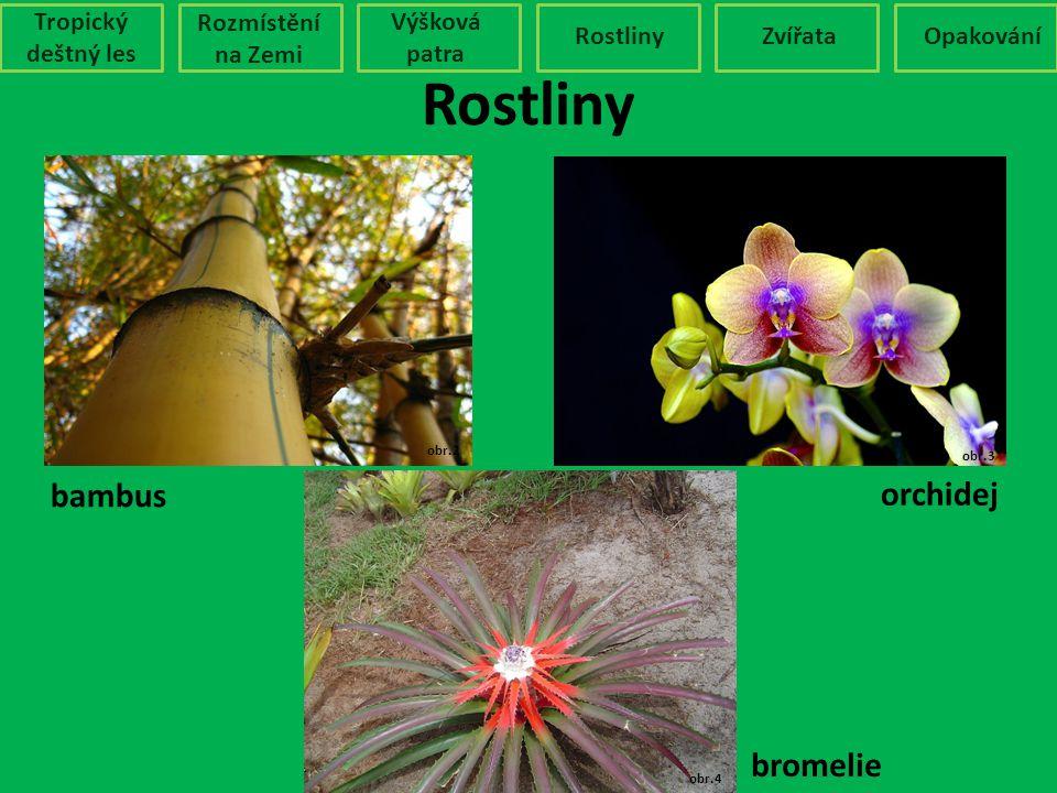 Rostliny Tropický deštný les Rozmístění na Zemi Výšková patra RostlinyZvířataOpakování obr.2 obr.3 obr.4 bambus orchidej bromelie