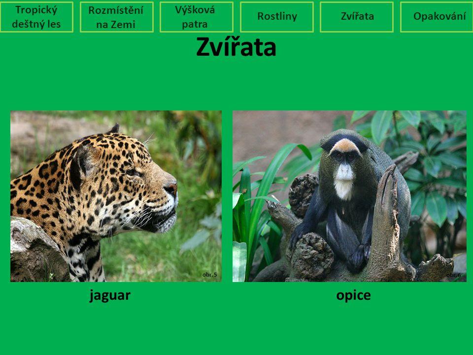 Zvířata Tropický deštný les Rozmístění na Zemi Výšková patra RostlinyZvířataOpakování obr.5 obr.6 jaguaropice