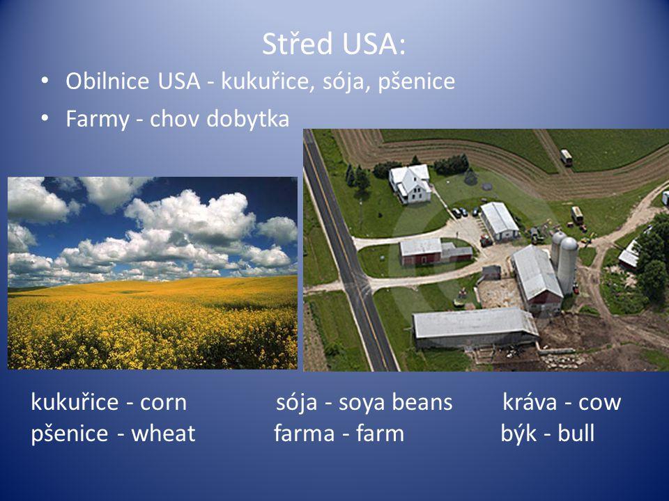 Střed USA: Obilnice USA - kukuřice, sója, pšenice Farmy - chov dobytka kukuřice - corn sója - soya beans kráva - cow pšenice - wheat farma - farm býk