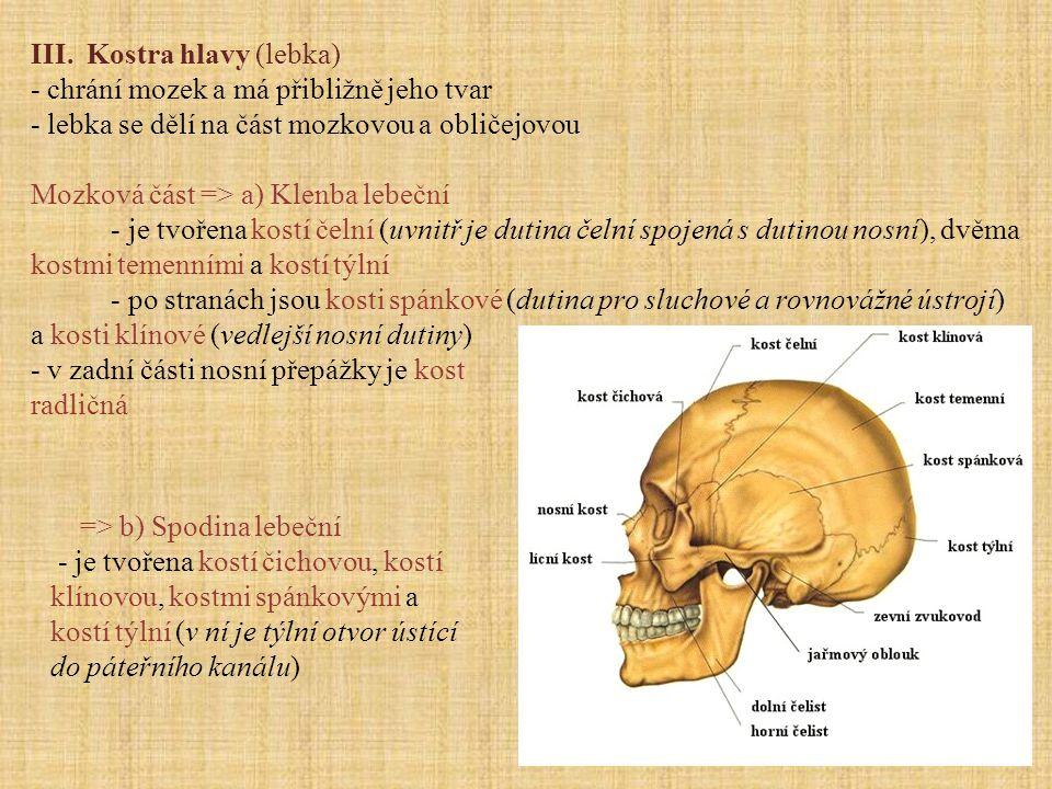 III. Kostra hlavy (lebka) - chrání mozek a má přibližně jeho tvar - lebka se dělí na část mozkovou a obličejovou Mozková část => a) Klenba lebeční - j