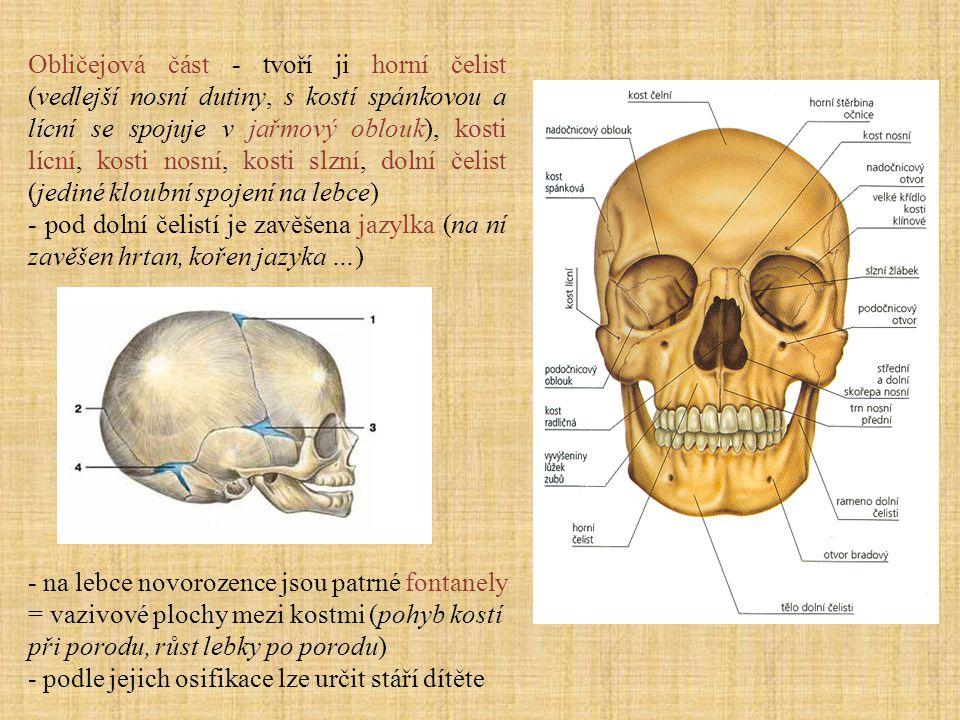 Obličejová část - tvoří ji horní čelist (vedlejší nosní dutiny, s kostí spánkovou a lícní se spojuje v jařmový oblouk), kosti lícní, kosti nosní, kost