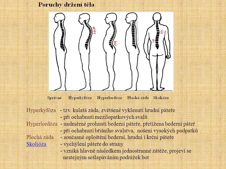 Hrudní kost - plochá, s žebry a hrudními obratli tvoří hrudní koš - tvoří ji 3 části: rukojeť, tělo a mečovitý výběžek - za ní se nachází brzlík - obsahuje červenou kostní dřeň (diagnostika) Žebra - obloukovitá kost s delší částí kostěnou a kratší chrupavčitou - kloubně spojena s hrudními obratli - 12 párů, chrání srdce a plíce - podle připojení chrupavčité části dělíme na : a) žebra pravá - prvních 7 párů, připojena přímo na hrudní kost b) žebra nepravá - další 3 páry, připojena na chrupavku vyšších žeber c) žebra volná - poslední 2 páry, zakončena volně ve stěně břišní