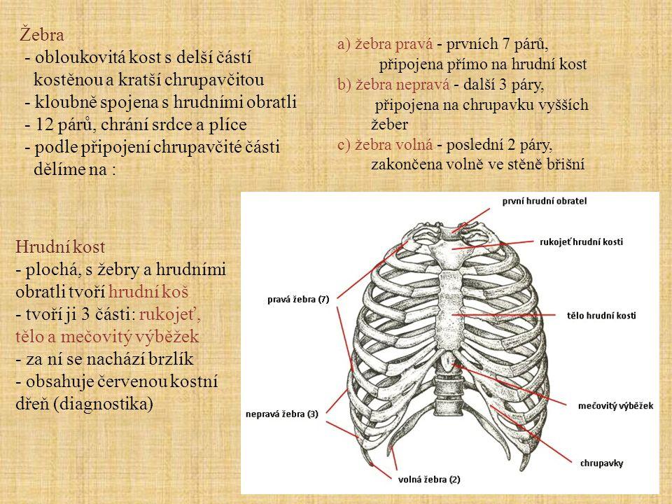 Hrudní kost - plochá, s žebry a hrudními obratli tvoří hrudní koš - tvoří ji 3 části: rukojeť, tělo a mečovitý výběžek - za ní se nachází brzlík - obs