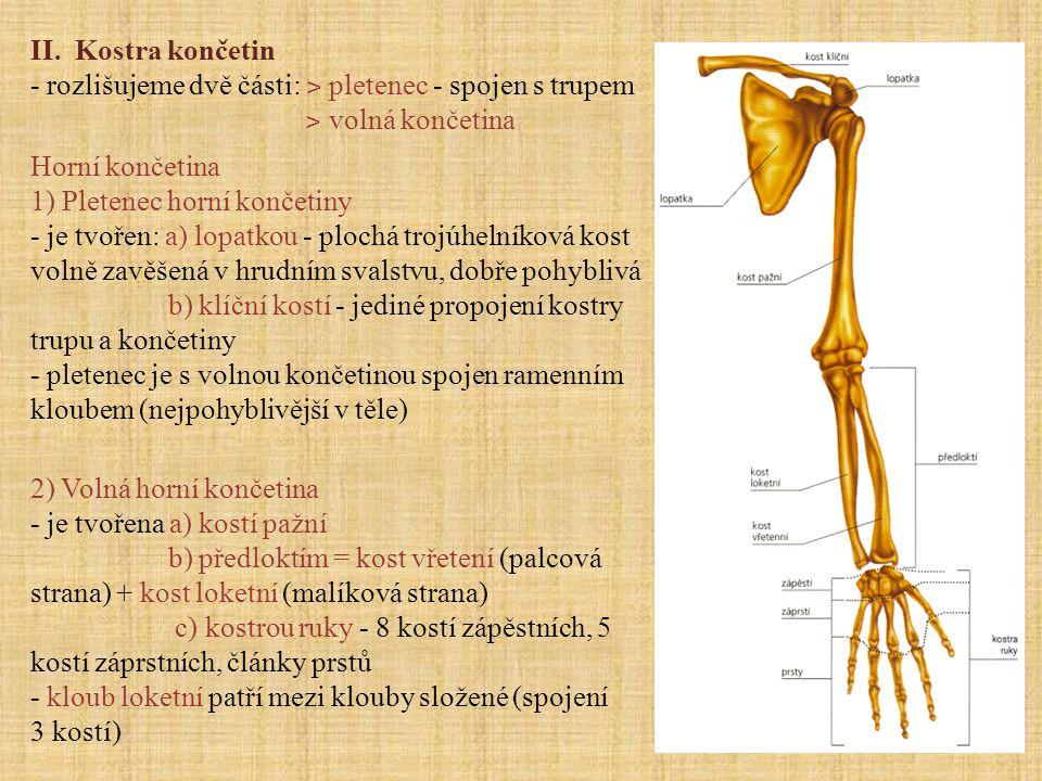 Dolní končetina 1) Pletenec dolní končetiny - je tvořen kostí pánevní - vzniká kolem 15 roku srůstem kosti kyčelní (2), sedací (3) a stydké (4) - kosti pánevní spojené chrupavčitou sponou stydkou (5) spolu s kostí křížovou (1) a kostrčí tvoří pánev - pánev člověka je širší než u jiných savců vlivem chůze po dvou - pánev ženy je kvůli porodům širší než pánev muže