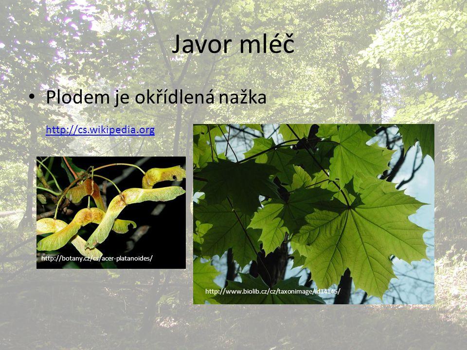 Javor mléč Plodem je okřídlená nažka http://cs.wikipedia.org http://www.biolib.cz/cz/taxonimage/id14145/ http://botany.cz/cs/acer-platanoides/