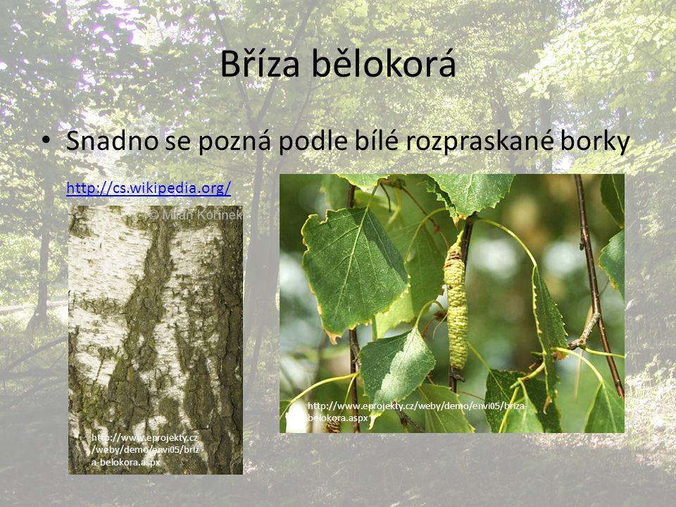 Bříza bělokorá Snadno se pozná podle bílé rozpraskané borky http://cs.wikipedia.org/ http://www.eprojekty.cz/weby/demo/envi05/briza- belokora.aspx