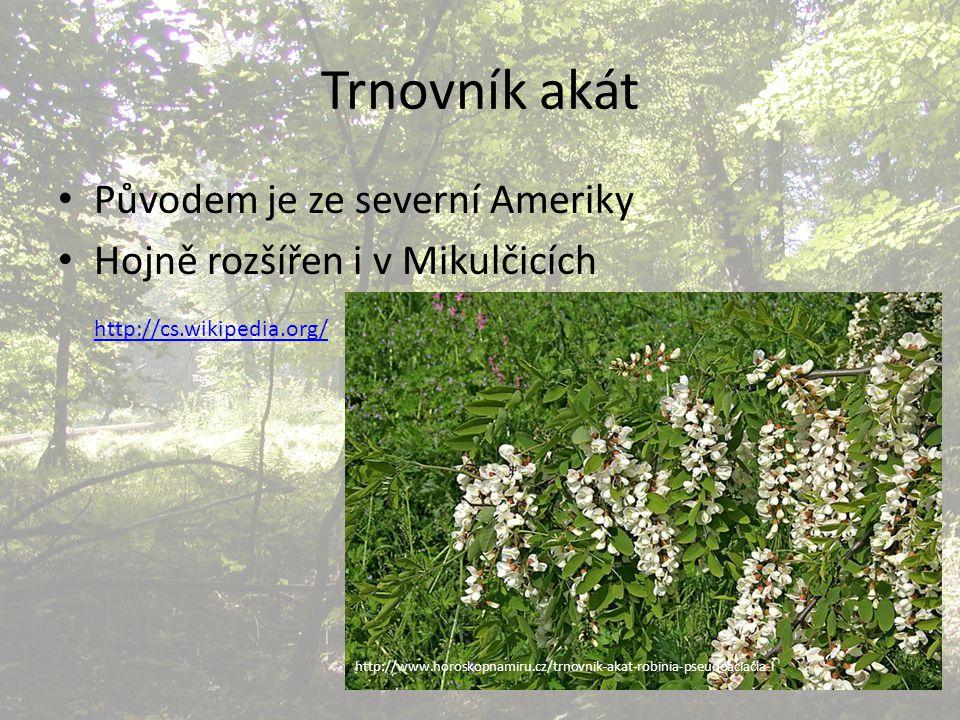 Trnovník akát Původem je ze severní Ameriky Hojně rozšířen i v Mikulčicích http://cs.wikipedia.org/ http://www.horoskopnamiru.cz/trnovnik-akat-robinia