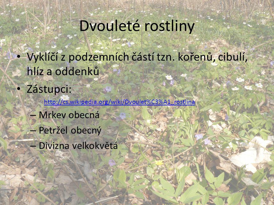 Dvouleté rostliny Vyklíčí z podzemních částí tzn. kořenů, cibulí, hlíz a oddenků Zástupci: http://cs.wikipedia.org/wiki/Dvoulet%C3%A1_rostlina – Mrkev