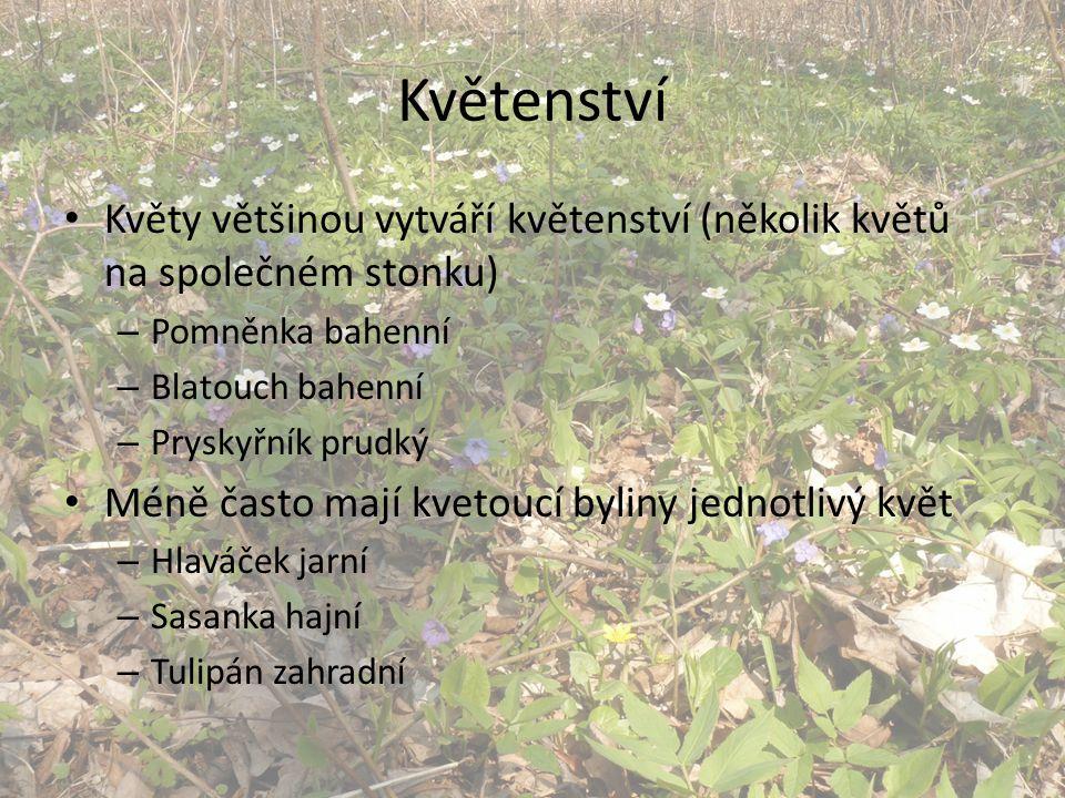 Květenství Květy většinou vytváří květenství (několik květů na společném stonku) – Pomněnka bahenní – Blatouch bahenní – Pryskyřník prudký Méně často mají kvetoucí byliny jednotlivý květ – Hlaváček jarní – Sasanka hajní – Tulipán zahradní
