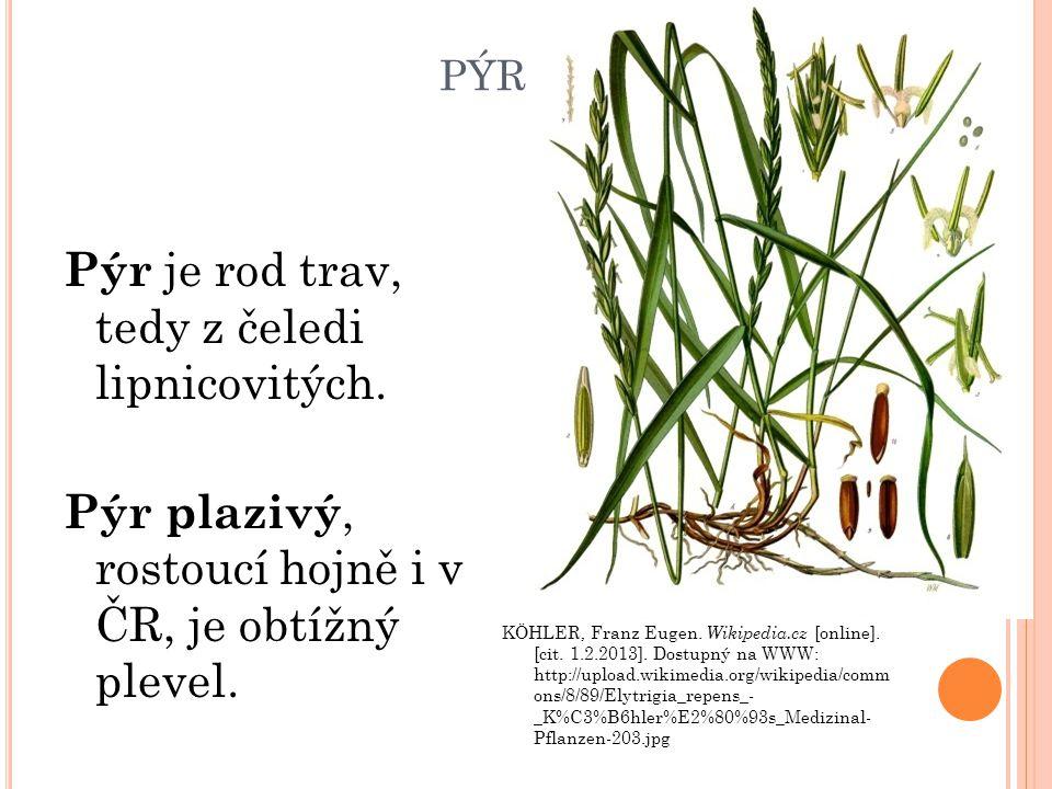 PÝR Pýr je rod trav, tedy z čeledi lipnicovitých. Pýr plazivý, rostoucí hojně i v ČR, je obtížný plevel. KÖHLER, Franz Eugen. Wikipedia.cz [online]. [
