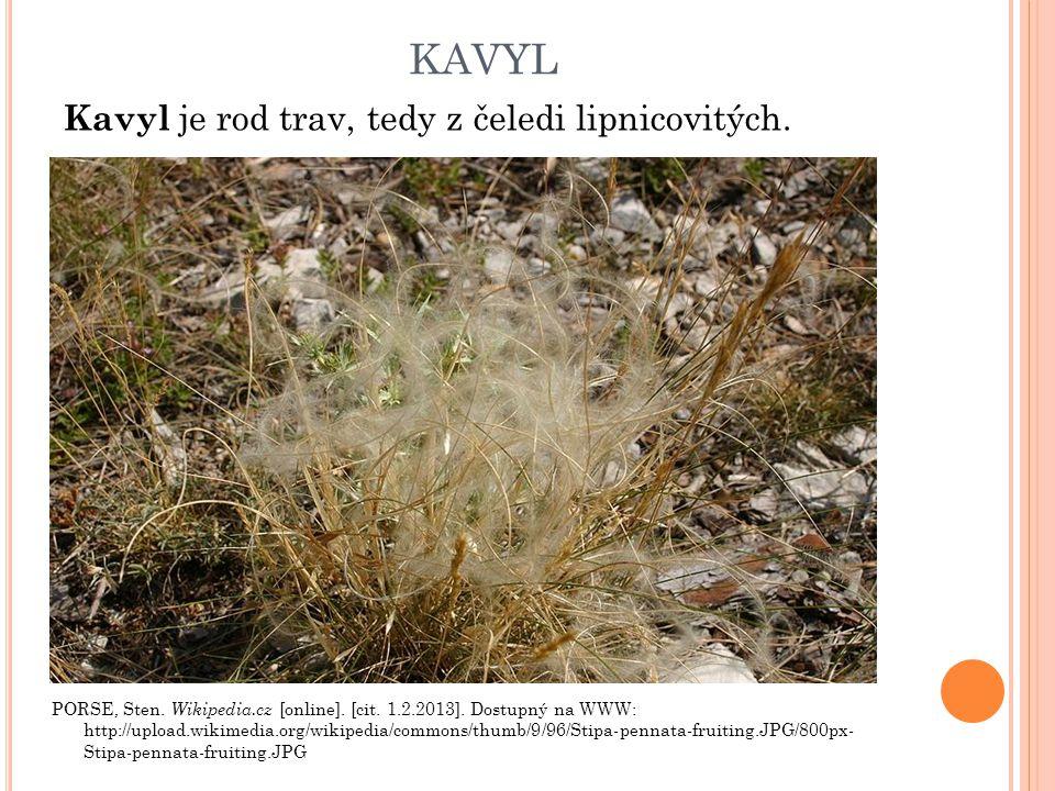 KAVYL Kavyl je rod trav, tedy z čeledi lipnicovitých. PORSE, Sten. Wikipedia.cz [online]. [cit. 1.2.2013]. Dostupný na WWW: http://upload.wikimedia.or