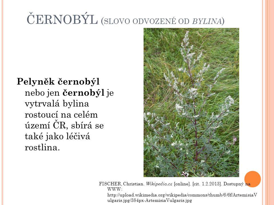 ČERNOBÝL ( SLOVO ODVOZENÉ OD BYLINA ) Pelyněk černobýl nebo jen černobýl je vytrvalá bylina rostoucí na celém území ČR, sbírá se také jako léčivá rost