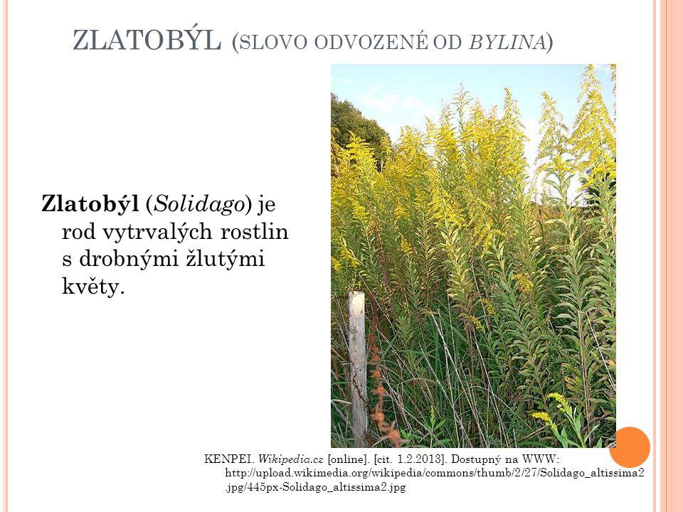 ZLATOBÝL ( SLOVO ODVOZENÉ OD BYLINA ) Zlatobýl ( Solidago ) je rod vytrvalých rostlin s drobnými žlutými květy. KENPEI. Wikipedia.cz [online]. [cit. 1