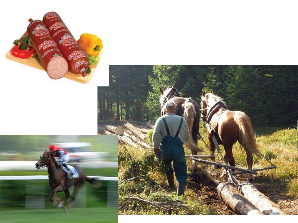 Říše: živočichové (Animalia) Kmen: strunatci (Chordata) Podkmen: obratlovci (Vertebrata) Třída: savci (Mammalia) Řád: lichokopytníci (Perissodactyla) Čeleď: koňovití (Equidae) Rod: kůň (Equus)