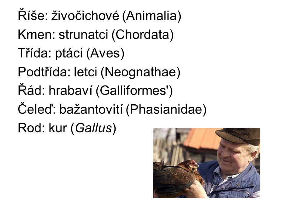 Říše: živočichové (Animalia) Kmen: strunatci (Chordata) Třída: ptáci (Aves) Podtřída: letci (Neognathae) Řád: hrabaví (Galliformes ) Čeleď: bažantovití (Phasianidae) Rod: kur (Gallus)