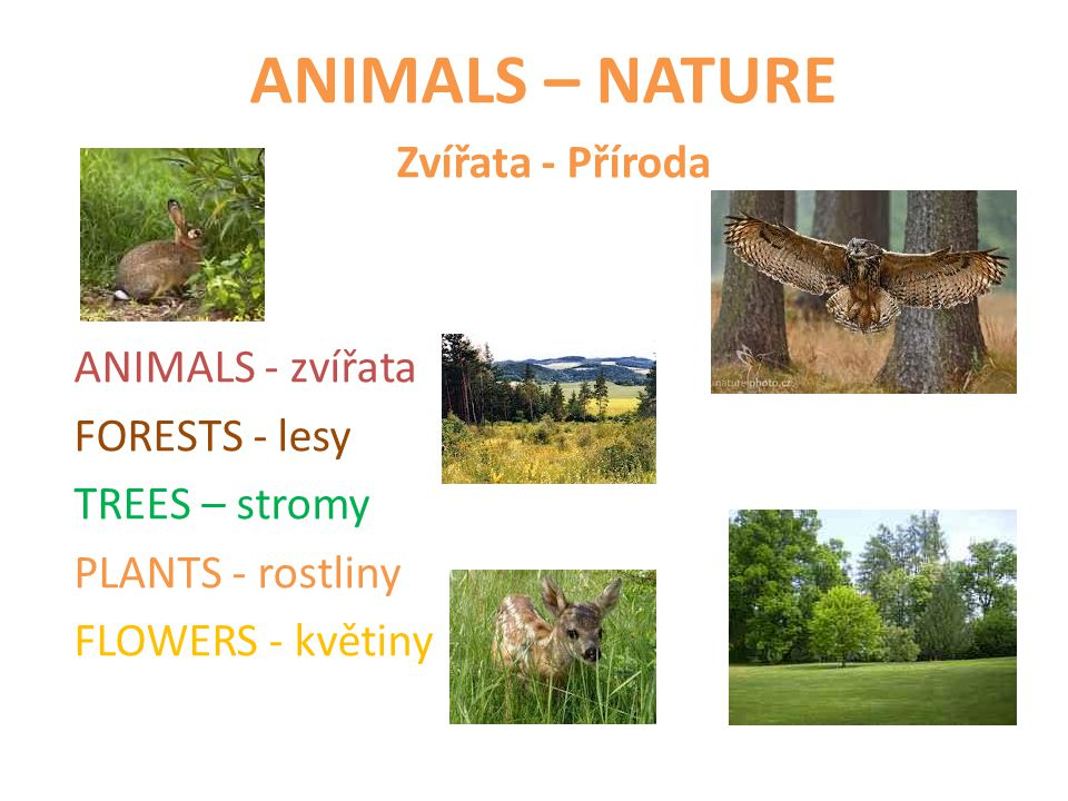 ANIMALS – NATURE Zvířata - Příroda ANIMALS - zvířata FORESTS - lesy TREES – stromy PLANTS - rostliny FLOWERS - květiny