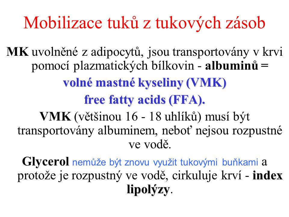 Mobilizace tuků z tukových zásob MK uvolněné z adipocytů, jsou transportovány v krvi pomocí plazmatických bílkovin - albuminů = volné mastné kyseliny (VMK) free fatty acids (FFA).