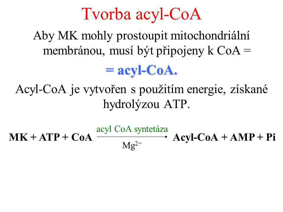 Tvorba acyl-CoA Aby MK mohly prostoupit mitochondriální membránou, musí být připojeny k CoA = = acyl-CoA.