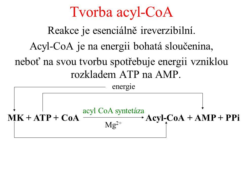 Tvorba acyl-CoA Reakce je esenciálně ireverzibilní.