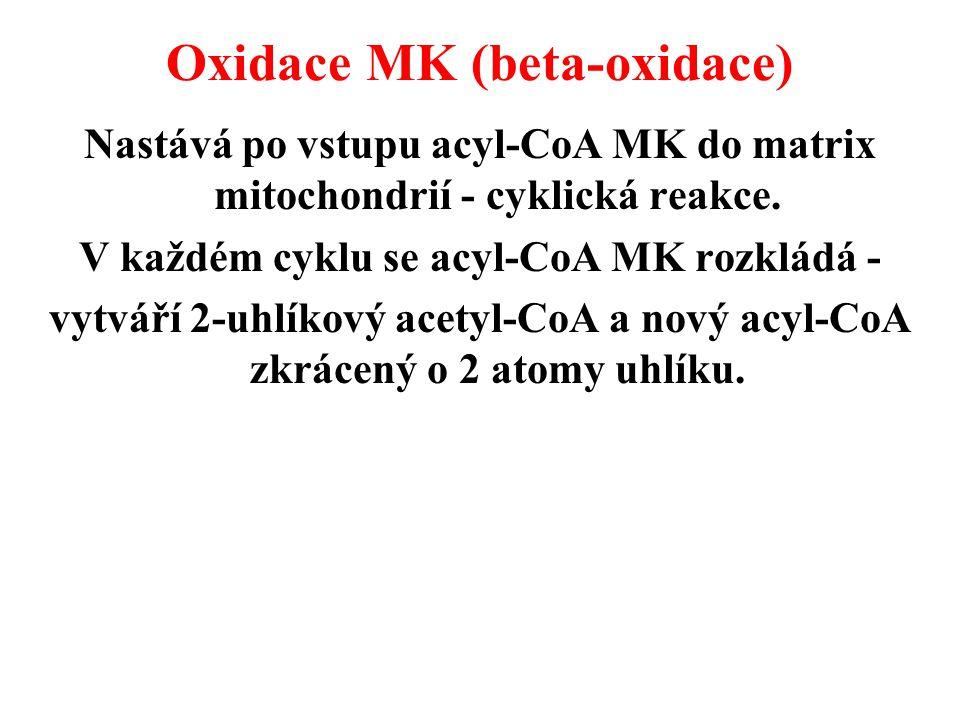 Oxidace MK (beta-oxidace) Nastává po vstupu acyl-CoA MK do matrix mitochondrií - cyklická reakce.