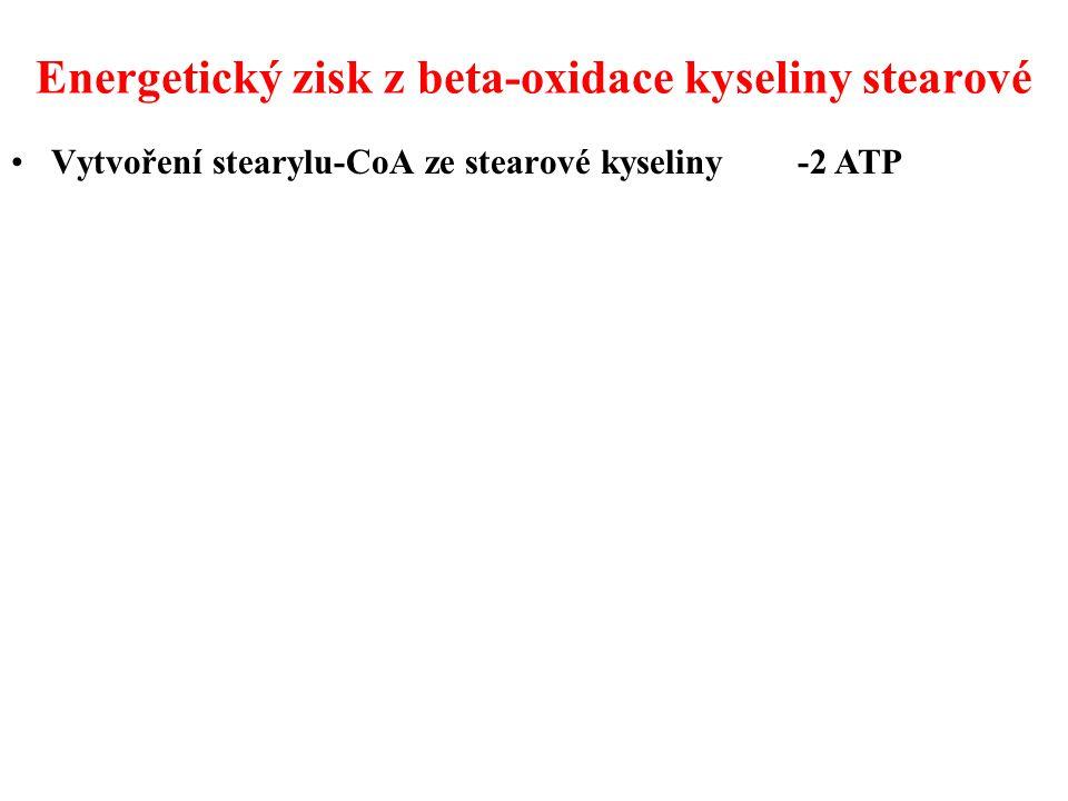 Energetický zisk z beta-oxidace kyseliny stearové Vytvoření stearylu-CoA ze stearové kyseliny -2 ATP