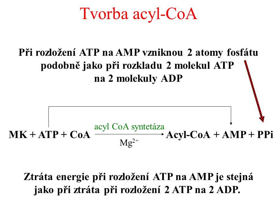 Tvorba acyl-CoA MK + ATP + CoAAcyl-CoA + AMP + PPi acyl CoA syntetáza Mg 2+ Při rozložení ATP na AMP vzniknou 2 atomy fosfátu podobně jako při rozkladu 2 molekul ATP na 2 molekuly ADP Ztráta energie při rozložení ATP na AMP je stejná jako při ztráta při rozložení 2 ATP na 2 ADP.