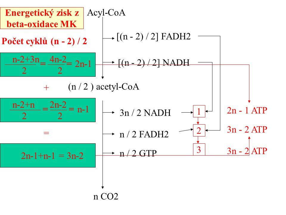 Acyl-CoA Počet cyklů (n - 2) / 2 [(n - 2) / 2] FADH2 [(n - 2) / 2] NADH (n / 2 ) acetyl-CoA 3n / 2 NADH n / 2 FADH2 n / 2 GTP 1 2 3 n CO2 n-2+3n 4n-2 2 2 == 2n - 1 ATP n-2+n 2n-2 2 2 == 2n-1+n-1 = 3n-2 2n-1 n-1 3n - 2 ATP + = Energetický zisk z beta-oxidace MK
