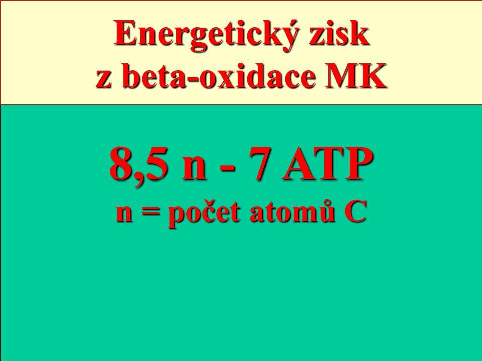 Acyl-CoA Počet cyklů (n - 2) : 2 [(n - 2) / 2] FADH2 [(n - 2) / 2] NADH (n / 2 ) acetyl-CoA 3n / 2 NADH n / 2 FADH2 n / 2 GTP 1 2 3 2n - 1 ATP 3n - 2 ATP n : 2 ATP n CO2 MK -2 ATP 8,5 n - 7 ATP n = počet atomů C Energetický zisk z beta-oxidace MK