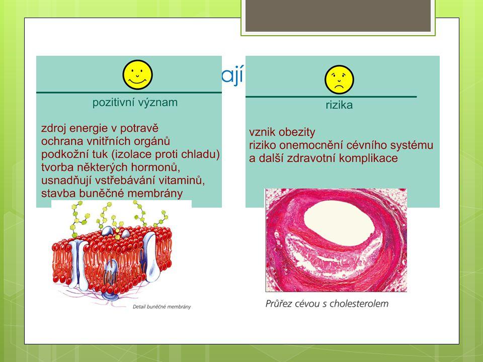 Jaký význam mají tuky pro živé organizmy?