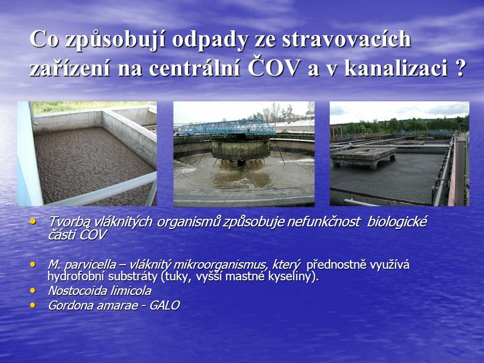 Co způsobují odpady ze stravovacích zařízení na centrální ČOV a v kanalizaci ? Tvorba vláknitých organismů způsobuje nefunkčnost biologické části ČOV