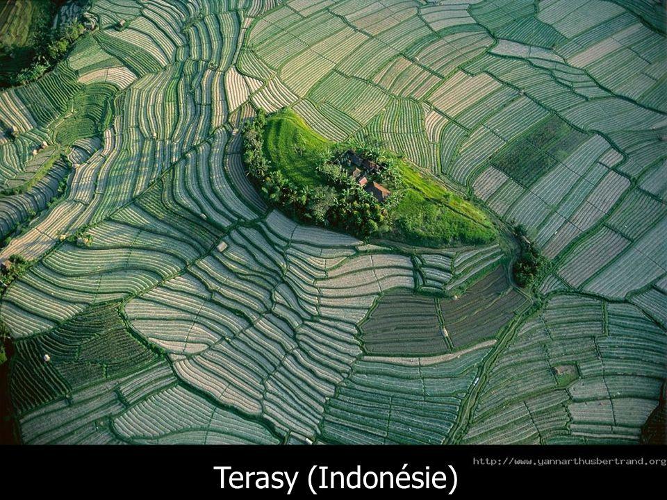 Terasy (Indonésie)