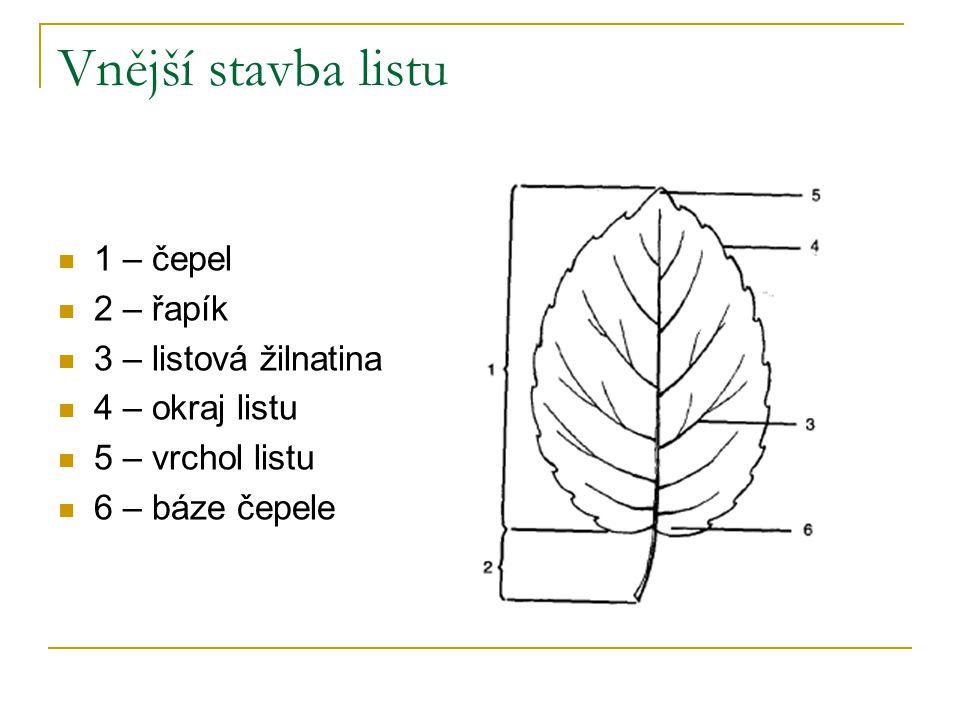Vnější stavba listu 1 – čepel 2 – řapík 3 – listová žilnatina 4 – okraj listu 5 – vrchol listu 6 – báze čepele
