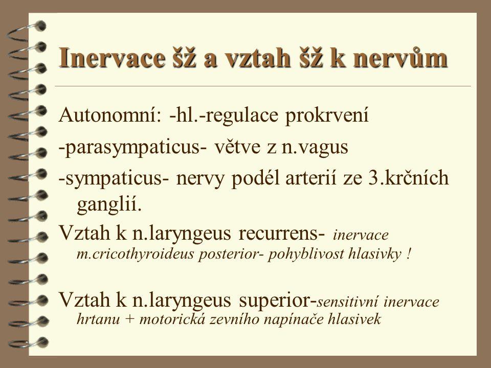 Inervace šž a vztah šž k nervům Autonomní: -hl.-regulace prokrvení -parasympaticus- větve z n.vagus -sympaticus- nervy podél arterií ze 3.krčních gang