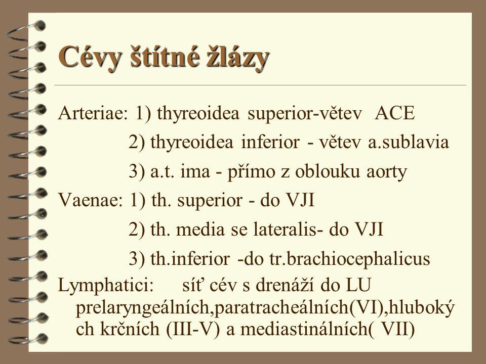 Cévy štítné žlázy Arteriae: 1) thyreoidea superior-větev ACE 2) thyreoidea inferior - větev a.sublavia 3) a.t. ima - přímo z oblouku aorty Vaenae: 1)
