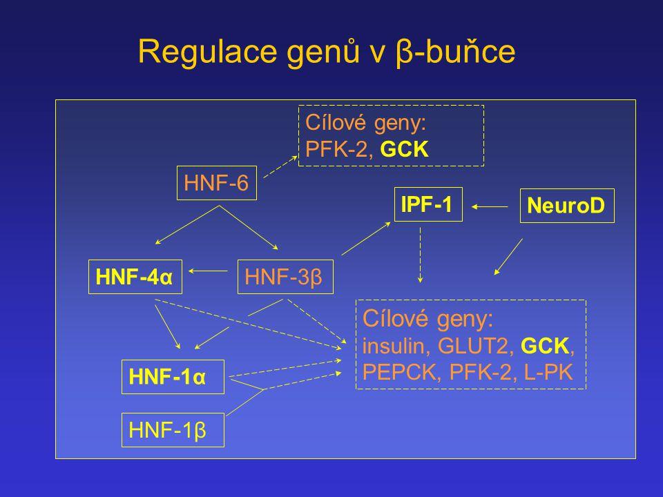 Regulace genů v β-buňce HNF-6 Cílové geny: PFK-2, GCK HNF-4αHNF-3β HNF-1α Cílové geny: insulin, GLUT2, GCK, PEPCK, PFK-2, L-PK IPF-1 NeuroD HNF-1β